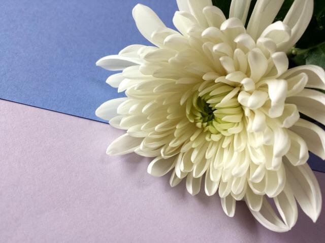 家族葬における香典の意味合い