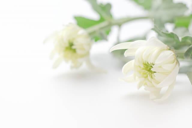 家族葬の香典を即日返しする場合のマナーや注意点