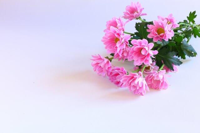 家族葬で供花は贈ってもいい?お花の選び方や手配のマナーを解説!