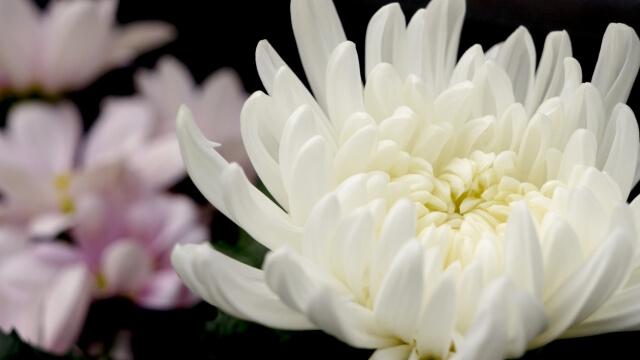 自宅での家族葬に参列する場合のマナー