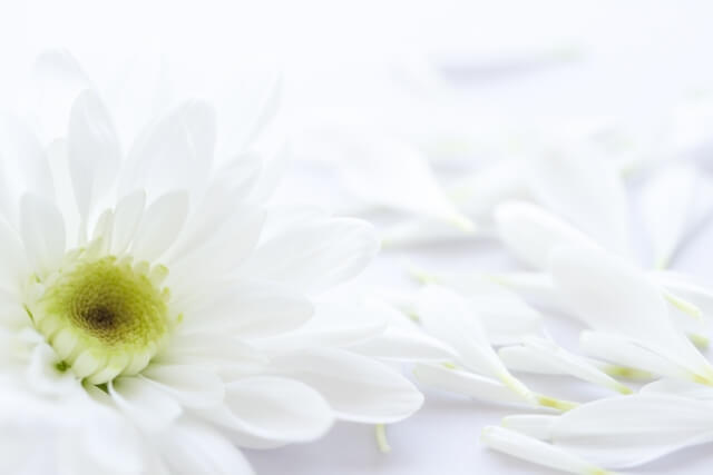 【家族葬に親戚は呼ばない?】連絡法やトラブル例、香典マナーを解説!